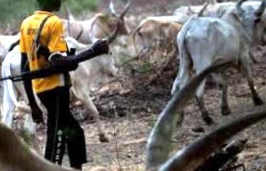Affrotement éleveurs - agriculteurs dans l'Etat de Benue