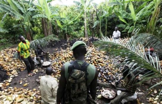 Les forêts classées ivoiriennes en plein pillage