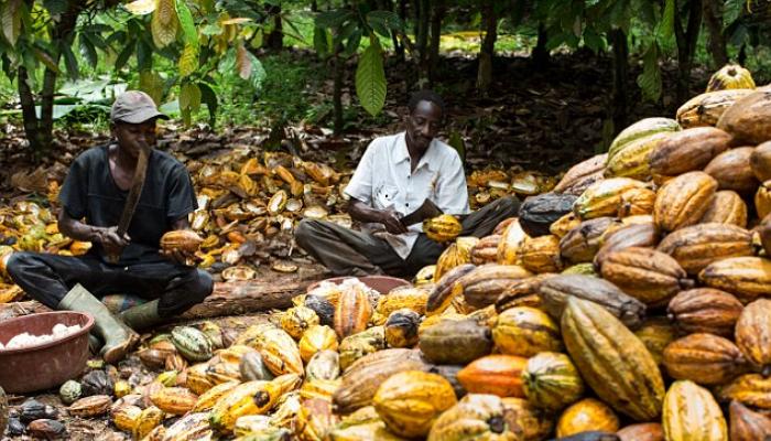 Cacao: Côte d'Ivoire -Ghana, Père Donald Zagoré réagit à la décision