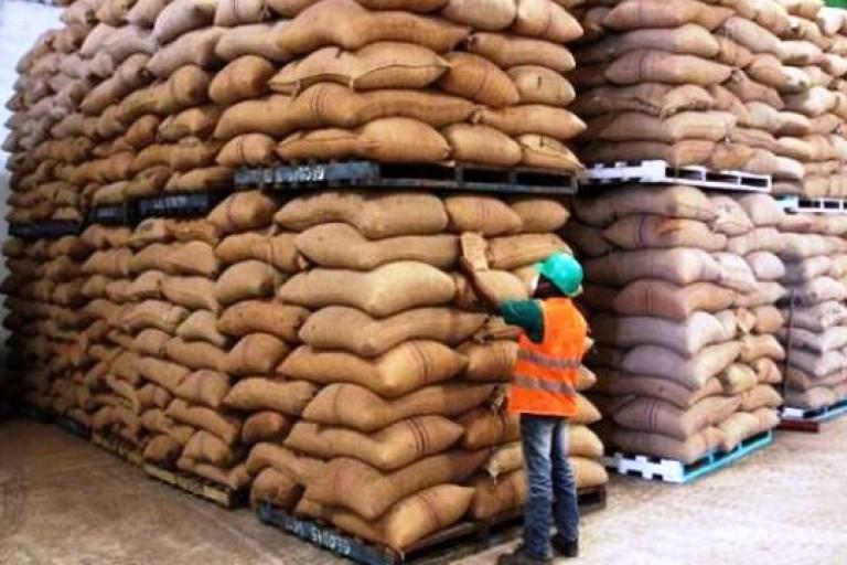 Cacao ivoirien, des critiques de nouveaux adressés