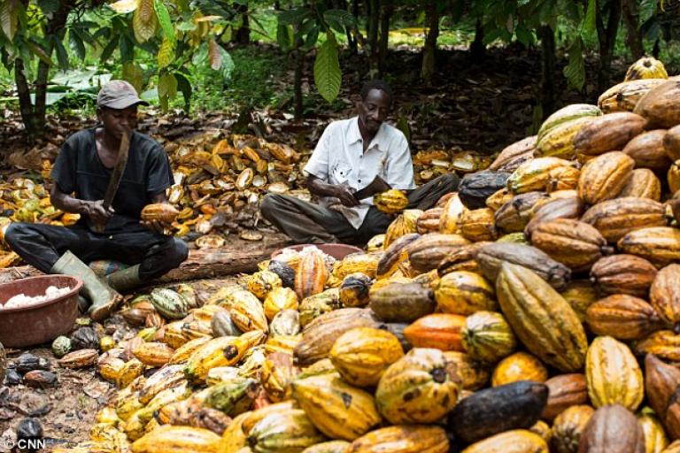 Père Donald Zagoré apprécie la suspension des ventes du cacao