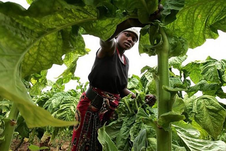 agriculture-en Côte d'Ivoire , un secteur à booster