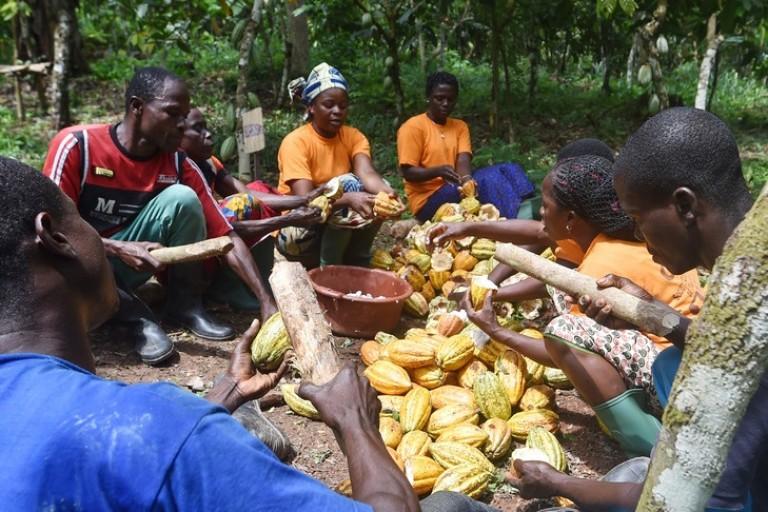 Rapport accablant de la Banque Mondiale sur le cacao