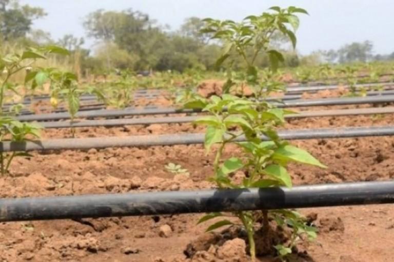 L' agriculture togolaise a reçu un coup de pousse avec ce projet