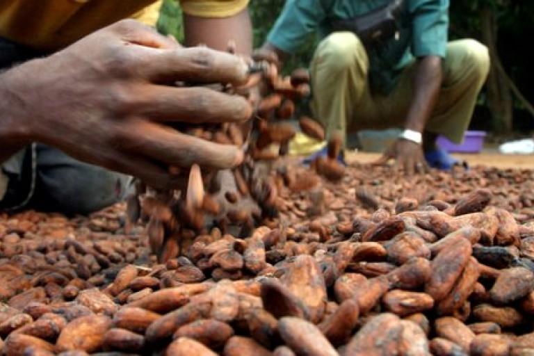 La filière cacao devrait reprendre du poil de la bête avec ce projet