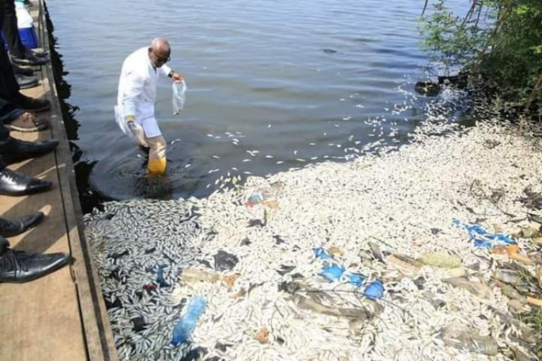 Des milliers de poissons ont été retrouvés sur les bords de la lagune