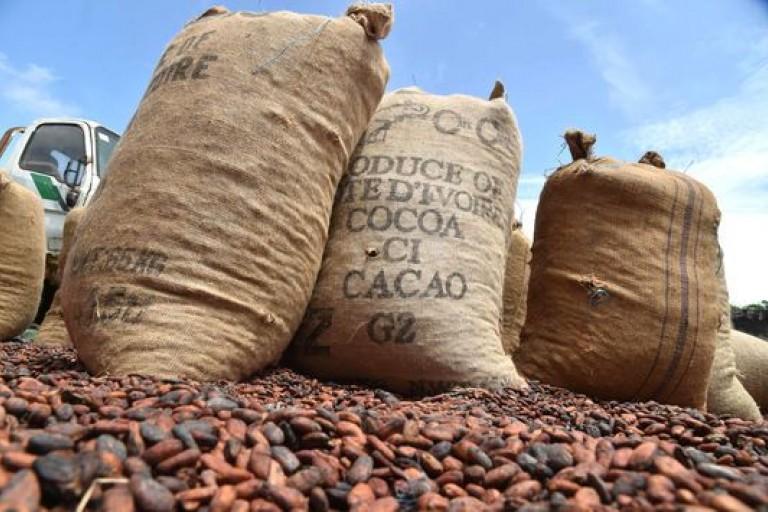 Le FPI de Gbagbo dénonce le nouveau prix bord champ du Kg de cacao