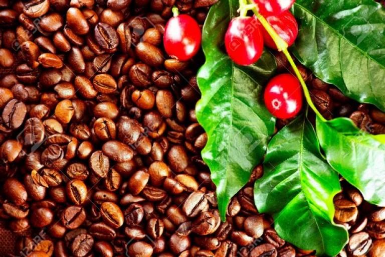 Campagne café 2019-2020: Le prix bord-champ maintenu à 700 FCFA