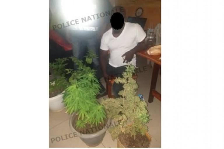 Un entrepreneur cultivateur de cannabis aux arrêts