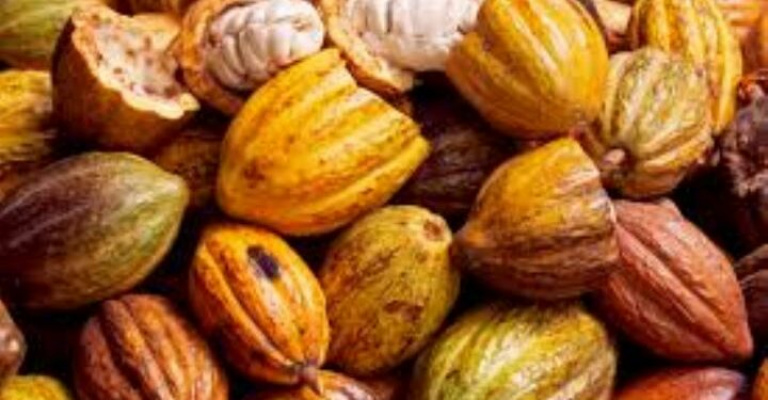 cacao - chine