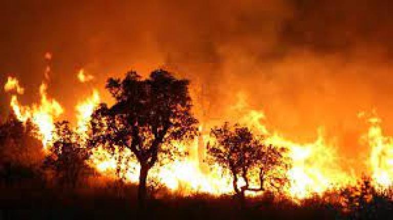 Algérie : Au moins 5 morts dans des incendies en Kabylie