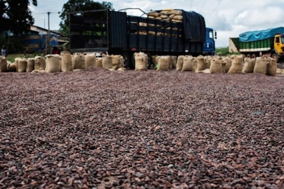 La Côte d'Ivoire premier producteur mondial de cacao
